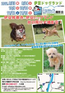 2011年秋の伊豆ドッグランド飛行犬撮影会