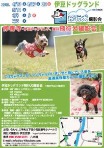 伊豆ドッグランド春の飛行犬撮影会