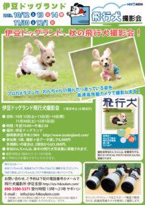 2013年11月30日・12月1日伊豆ドッグランド飛行犬撮影会